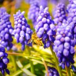 ハチミツは美容と健康に最適の総合栄養食品!食べるだけじゃない使い方
